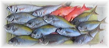 釣り大会釣果