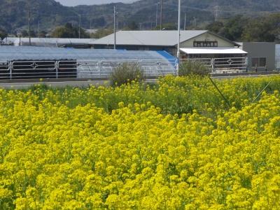 りっちゃん農園01