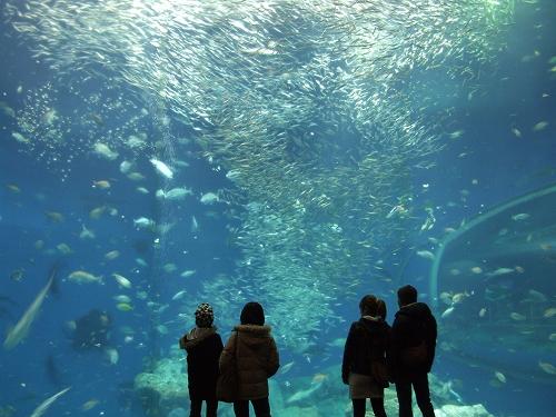 アクアワールド大水槽09