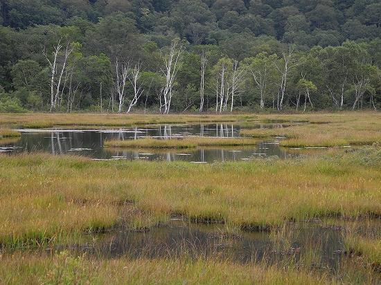尾瀬ヶ原・池塘とシラカバ01
