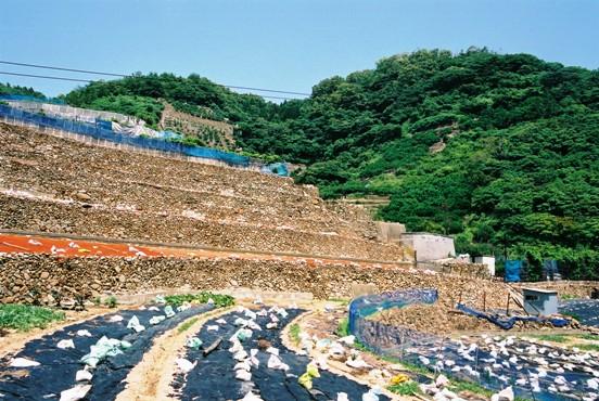 鹿島の段々畑