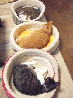 猫ベッドの3匹