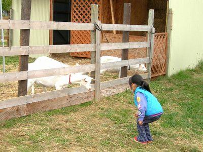 2010秋の大収穫祭_ヤギ