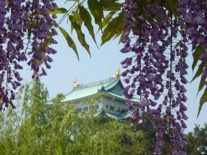 藤棚より名古屋城を望む