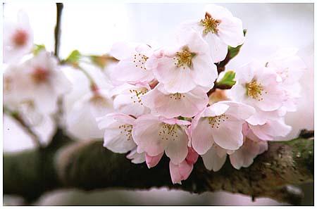 姥桜 | 弥々*とはず語り - 楽天ブログ
