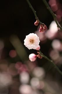 うすピンク