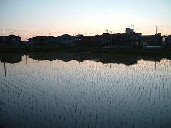 夕方の田んぼ