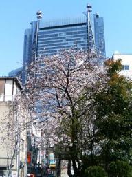 桜田公園からの桜と汐留のビル