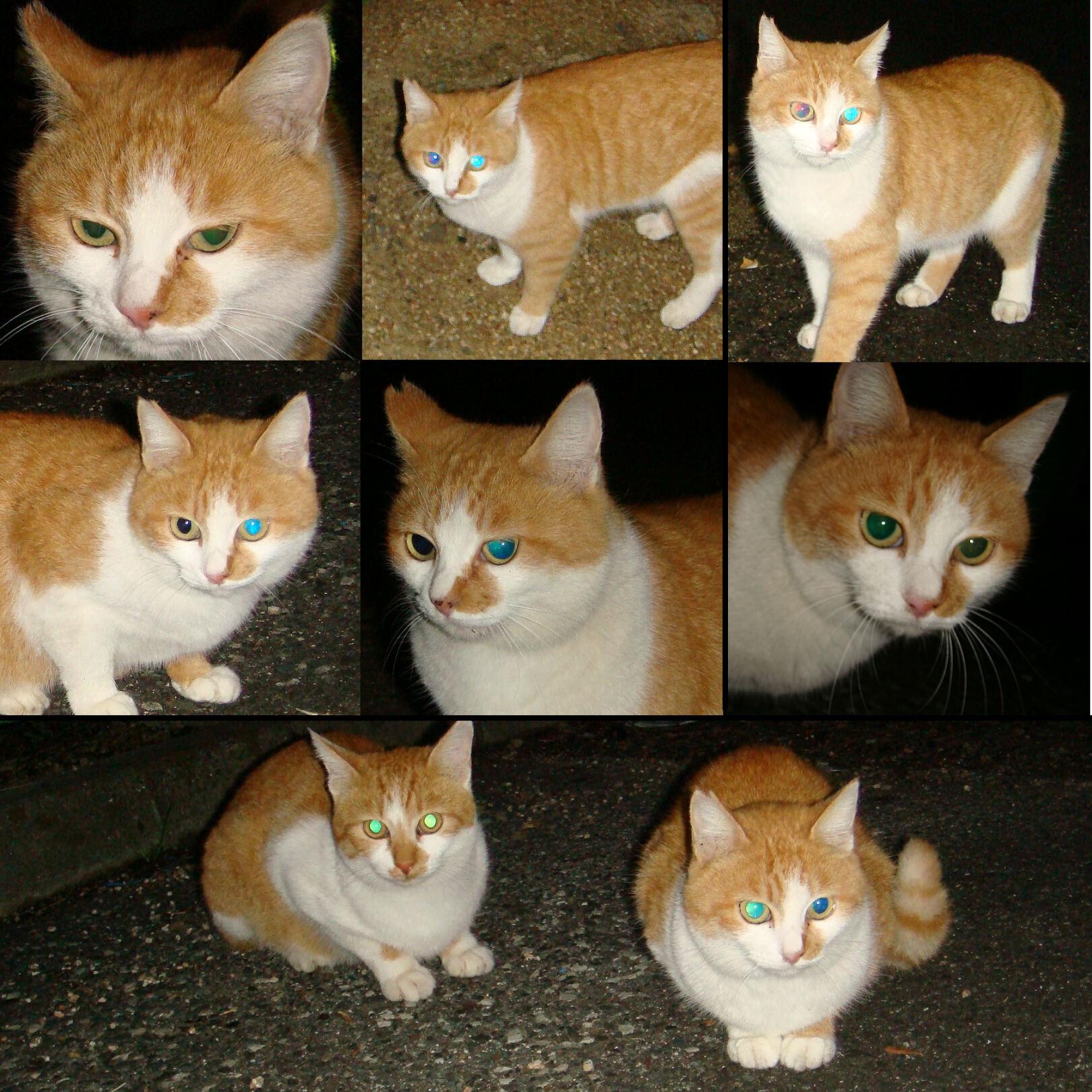 が の 違う 色 猫 の 目 左右