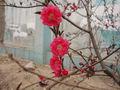桃 紅色.jpg
