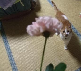 花とおじさん・・・