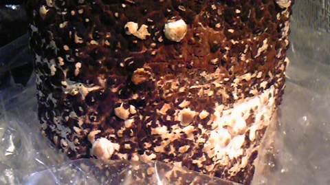 もりのしいたけ農園20081025-1.jpg