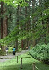 樹齢350年以上の杉の大木が立ち並ぶ境内