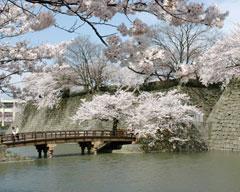 福井城址御廊下橋、かつての天守閣付近