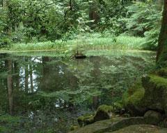 義経ゆかりの白山平泉寺発祥の地「御手洗池(みたらしいけ)」