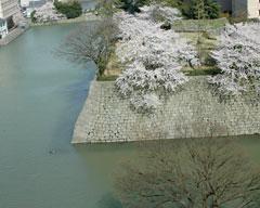 福井城址かつての天守閣付近