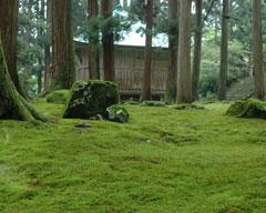 京都の苔寺にも勝るといわれる平泉寺の苔