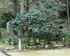 義景館跡南東部にある「朝倉義景公墓所」