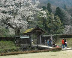 朝倉遺跡の春
