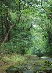 「日本の道百選」の一つの石畳参道=平泉寺