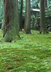 10月に入っても美しい苔=平泉寺本殿付近