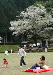 朝倉遺跡、春の風景