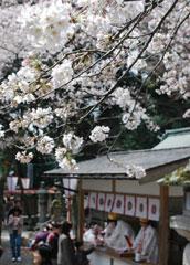 """恋心を""""桜の小枝""""に託す「花換祭」"""