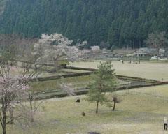南陽寺から見る義景館跡