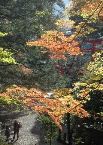 花筺(かきょう)公園の美しいモミジの紅葉