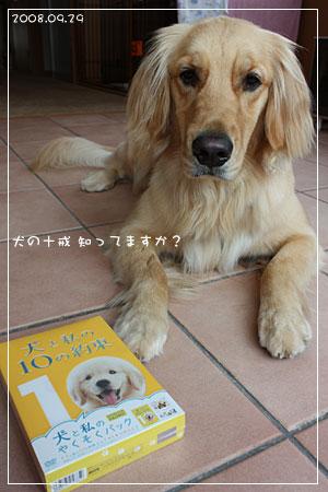 犬の十戒知ってますか(08.09.29)