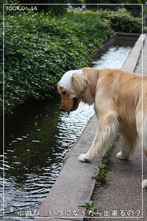 水遊び、いつになったら出来ますか(08.06.14)