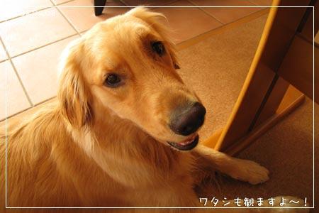 ワタシも観るよ~(08.09.08)