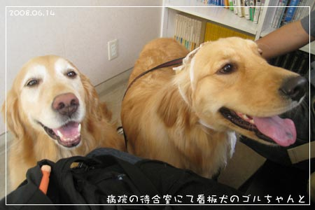病院の待合室で看板犬のゴルちゃんと(08.06.14)