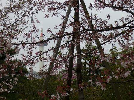 京都タワーを望む・枳穀邸