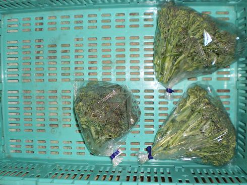 ブロッコリー3袋