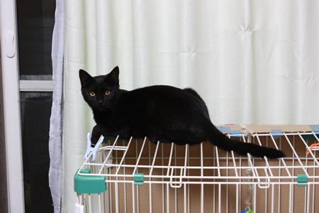3黒猫影丸くん家族募集