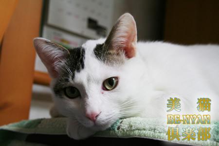 美猫 BE-NYAN 倶楽部