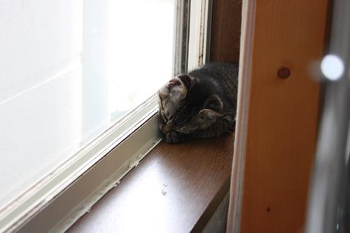 窓際のたんぽぽちゃん