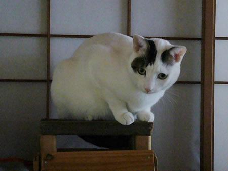 狭いところにも美猫。