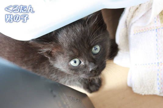 縁起の良い黒猫くろたん