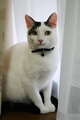 美猫座りを披露