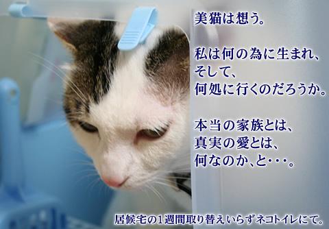 悲痛な面持ちは美猫ならでは
