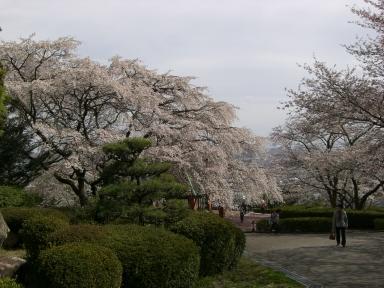 半田山植物園2