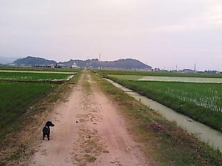田園の散歩