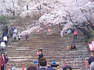 鶴山公園2010