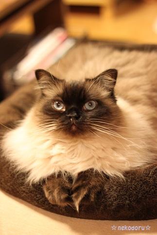 まるでモデル猫さん