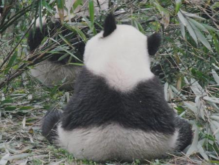 おにぎりパンダ