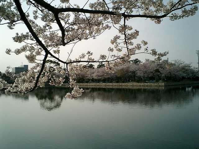 桜九華公園お堀