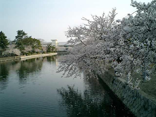 桜橋の上から