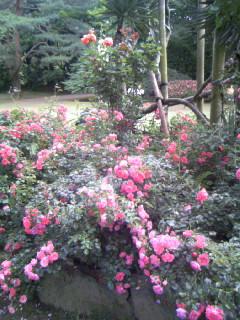 庭園 バラ 群像.JPG
